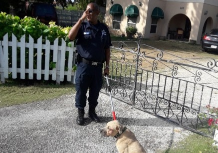 RCIPS and DOA Clarify Actions Taken Following Surrender of Dogs, 12 March