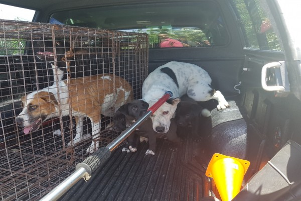 West Bay Community Officers Assist with the Surrender of Ferocious Dogs to the DOA