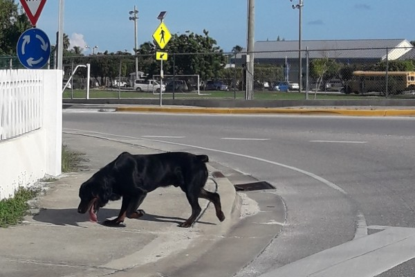 West Bay Community Officers Restrain Ferocious Dog Near Sir John A. Cumber Primary