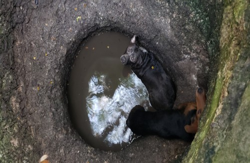 Public Alerts Police to Stranded Dogs in Well in West Bay; Two Dogs Rescued, 19 February
