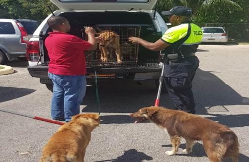 DOA and CPD Dog Seizure - Beat 8