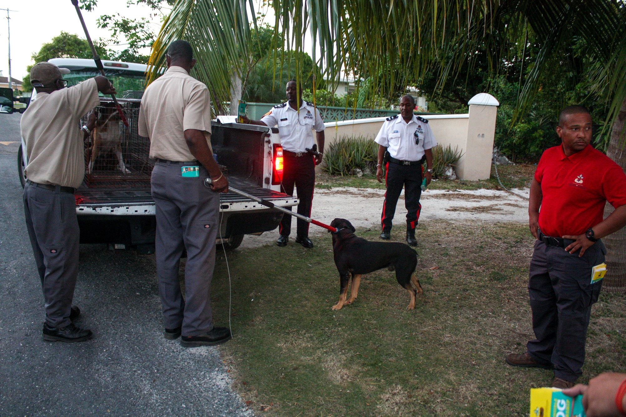 Two dogs were seized on Boltins Avenue.